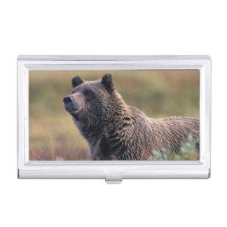 NA, USA, Alaska, Denali NP, Grizzly bear Business Card Holder