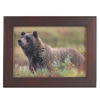 NA, USA, Alaska, Denali NP, Grizzly bear Keepsake Box