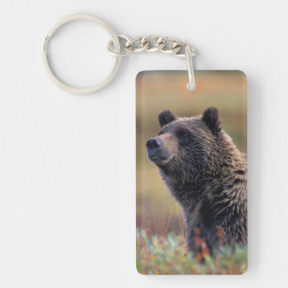 NA, USA, Alaska, Denali NP, Grizzly bear Keychains