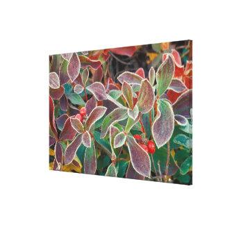 NA, USA, Alaska, Denali NP, Wonder Lake, 2 Canvas Print
