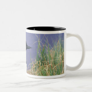NA, USA, Alaska, Denali NP, Wonder Lake, 2 Two-Tone Coffee Mug