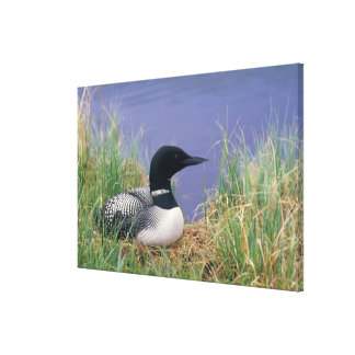 NA, USA, Alaska, Denali NP, Wonder Lake, Canvas Print