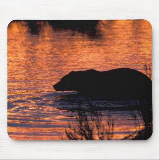 NA, USA, Alaska, Grizzly bear Mouse Mat