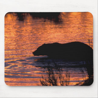 NA, USA, Alaska, Grizzly bear Mouse Pads