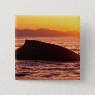 NA, USA, Alaska, Inside Passage, Humpback 15 Cm Square Badge