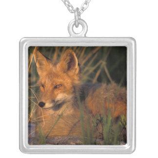 NA, USA, Alaska, Katmai NP, Vulpes vulpes red Silver Plated Necklace