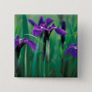 NA, USA, Alaska, Knight Island, Wild iris 15 Cm Square Badge