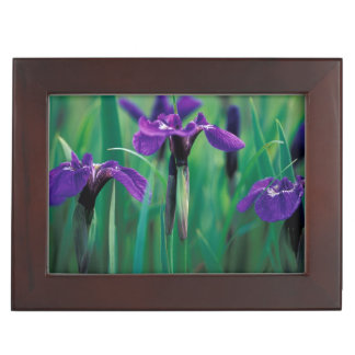 NA, USA, Alaska, Knight Island, Wild iris Keepsake Box