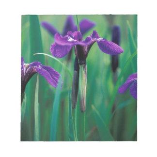 NA, USA, Alaska, Knight Island, Wild iris Notepad