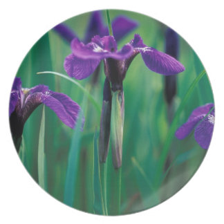 NA, USA, Alaska, Knight Island, Wild iris Party Plate