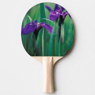 NA, USA, Alaska, Knight Island, Wild iris Ping Pong Paddle