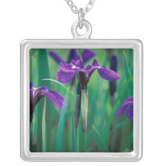 NA, USA, Alaska, Knight Island, Wild iris Silver Plated Necklace
