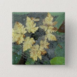 NA, USA, Alaska, Nancy Lake. Dew on spiderweb 15 Cm Square Badge