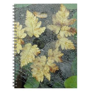 NA, USA, Alaska, Nancy Lake. Dew on spiderweb Notebook