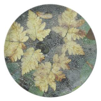 NA, USA, Alaska, Nancy Lake. Dew on spiderweb Plate