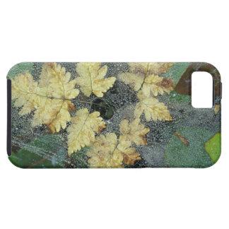 NA, USA, Alaska, Nancy Lake. Dew on spiderweb Tough iPhone 5 Case