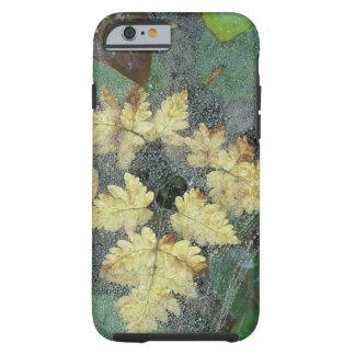NA, USA, Alaska, Nancy Lake. Dew on spiderweb Tough iPhone 6 Case