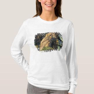 NA, USA, Alaska, near Fairbanks, An immature T-Shirt