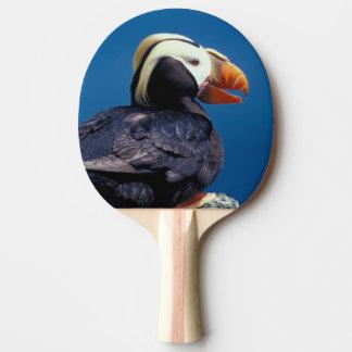 NA, USA, Alaska, Pribilof Islands, St. Paul Ping Pong Paddle