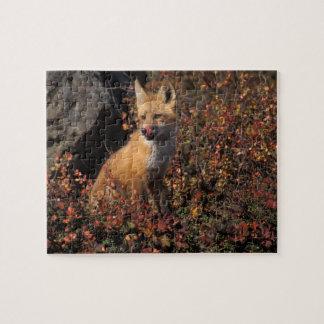 NA, USA, Alaska, red fox, Vulpes vulpes, in fall 2 Jigsaw Puzzle