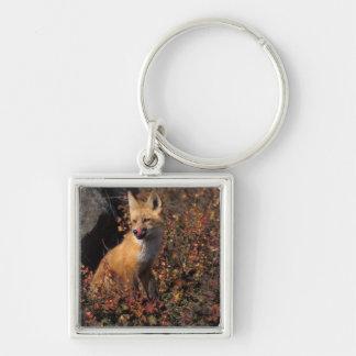 NA, USA, Alaska, red fox, Vulpes vulpes, in fall 2 Silver-Colored Square Key Ring