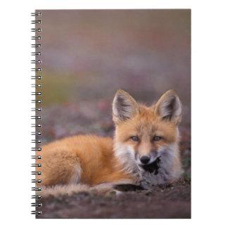 NA, USA, Alaska, red fox, Vulpes vulpes, in fall Spiral Notebook