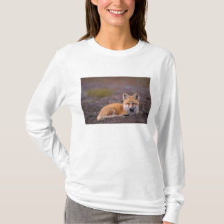 NA, USA, Alaska, red fox, Vulpes vulpes, in fall T-Shirt