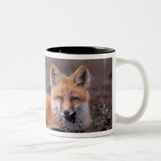 NA, USA, Alaska, red fox, Vulpes vulpes, in fall Two-Tone Coffee Mug