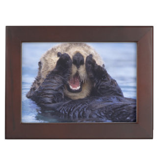 NA, USA, Alaska. Sea otters are the largest Memory Box