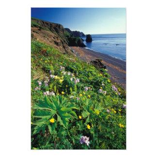 NA, USA, Alaska, Semidi Islands, Wildflowers Photo Print