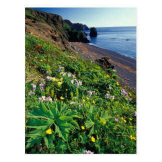 NA, USA, Alaska, Semidi Islands, Wildflowers Postcard