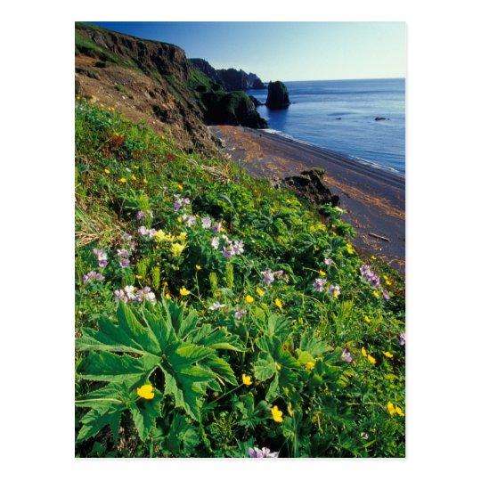 NA, USA, Alaska, Semidi Islands, Wildflowers Postcard
