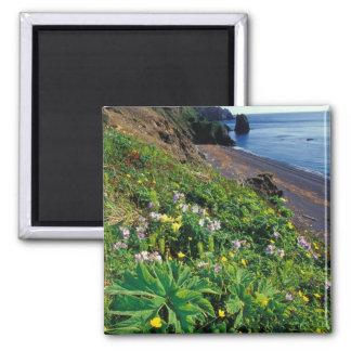 NA, USA, Alaska, Semidi Islands, Wildflowers Square Magnet