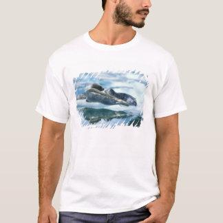 NA, USA, Alaska, Southeast Alaska, Le Conte 2 T-Shirt