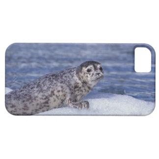NA, USA, Alaska, Southeast Alaska, Le Conte Barely There iPhone 5 Case