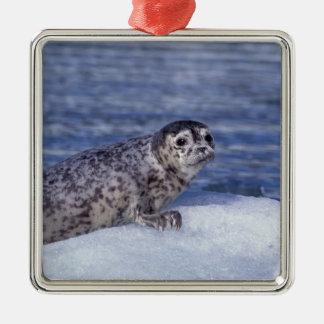 NA, USA, Alaska, Southeast Alaska, Le Conte Christmas Ornament
