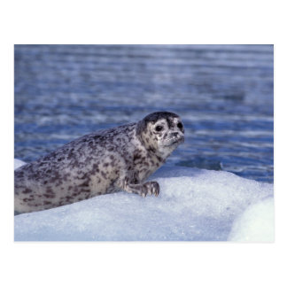 NA, USA, Alaska, Southeast Alaska, Le Conte Postcard