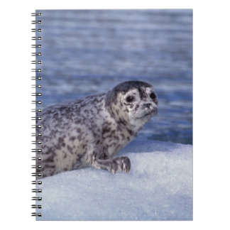 NA, USA, Alaska, Southeast Alaska, Le Conte Spiral Notebook