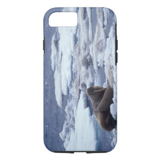 NA, USA, Alaska, Walrus and young on ice in iPhone 8/7 Case