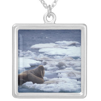 NA, USA, Alaska, Walrus and young on ice in Silver Plated Necklace