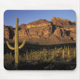 NA, USA, Arizona. Organ Pipe Cactus National 2 Mouse Mat