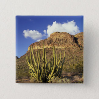 NA, USA, Arizona. Organ Pipe Cactus National 3 15 Cm Square Badge