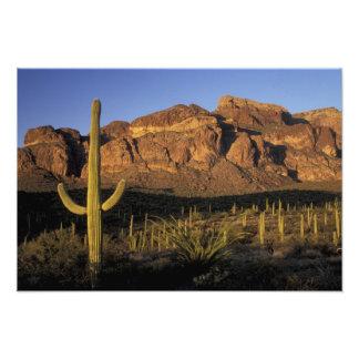 NA, USA, Arizona. Organ Pipe Cactus National 3 Photographic Print