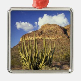NA, USA, Arizona. Organ Pipe Cactus National 3 Silver-Colored Square Decoration