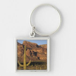 NA, USA, Arizona. Organ Pipe Cactus National Key Ring