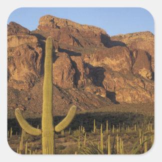 NA, USA, Arizona. Organ Pipe Cactus National Square Sticker