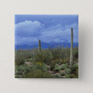 NA, USA, Arizona, Saguaro National Monument, 15 Cm Square Badge