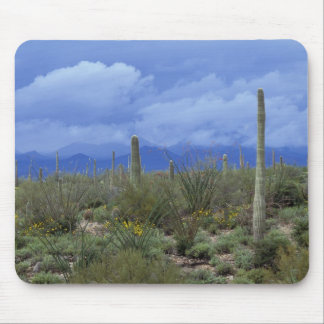 NA, USA, Arizona, Saguaro National Monument, Mouse Mat