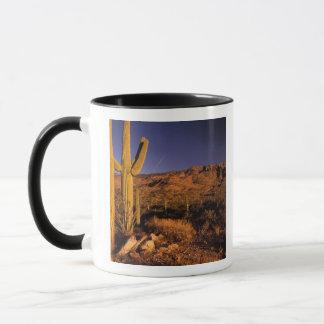 NA, USA, Arizona, Saguaro National Monument, Mug