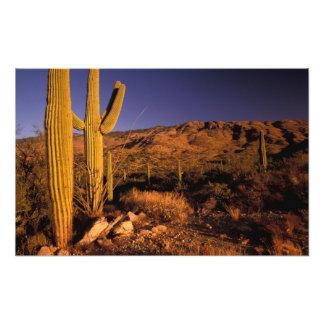 NA, USA, Arizona, Saguaro National Monument, Photo Art